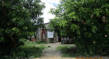 Alaminos City: Balangubong
